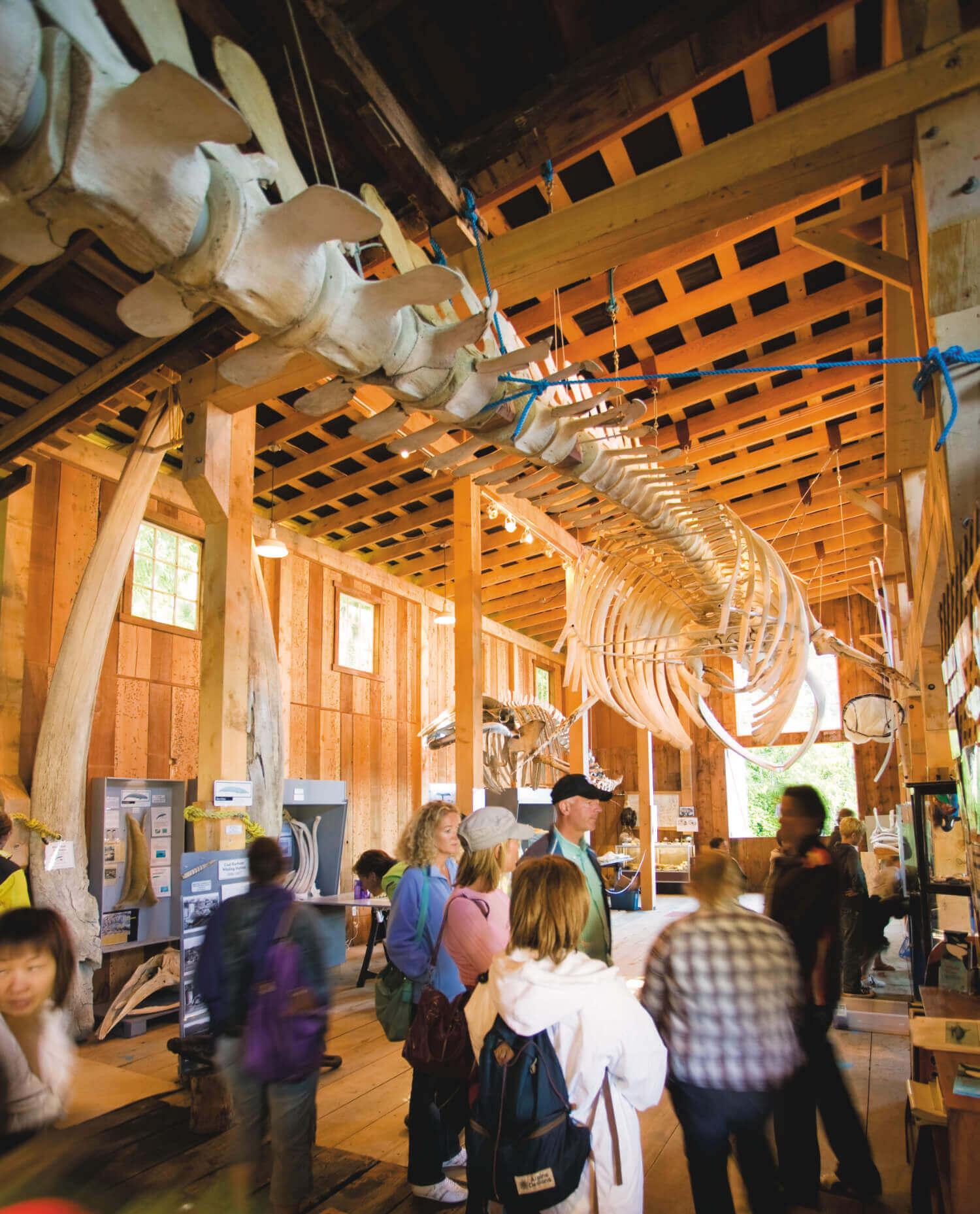 giant fin whale skeleton, Whale Interpretive Centre, Telegraph Cove, BC