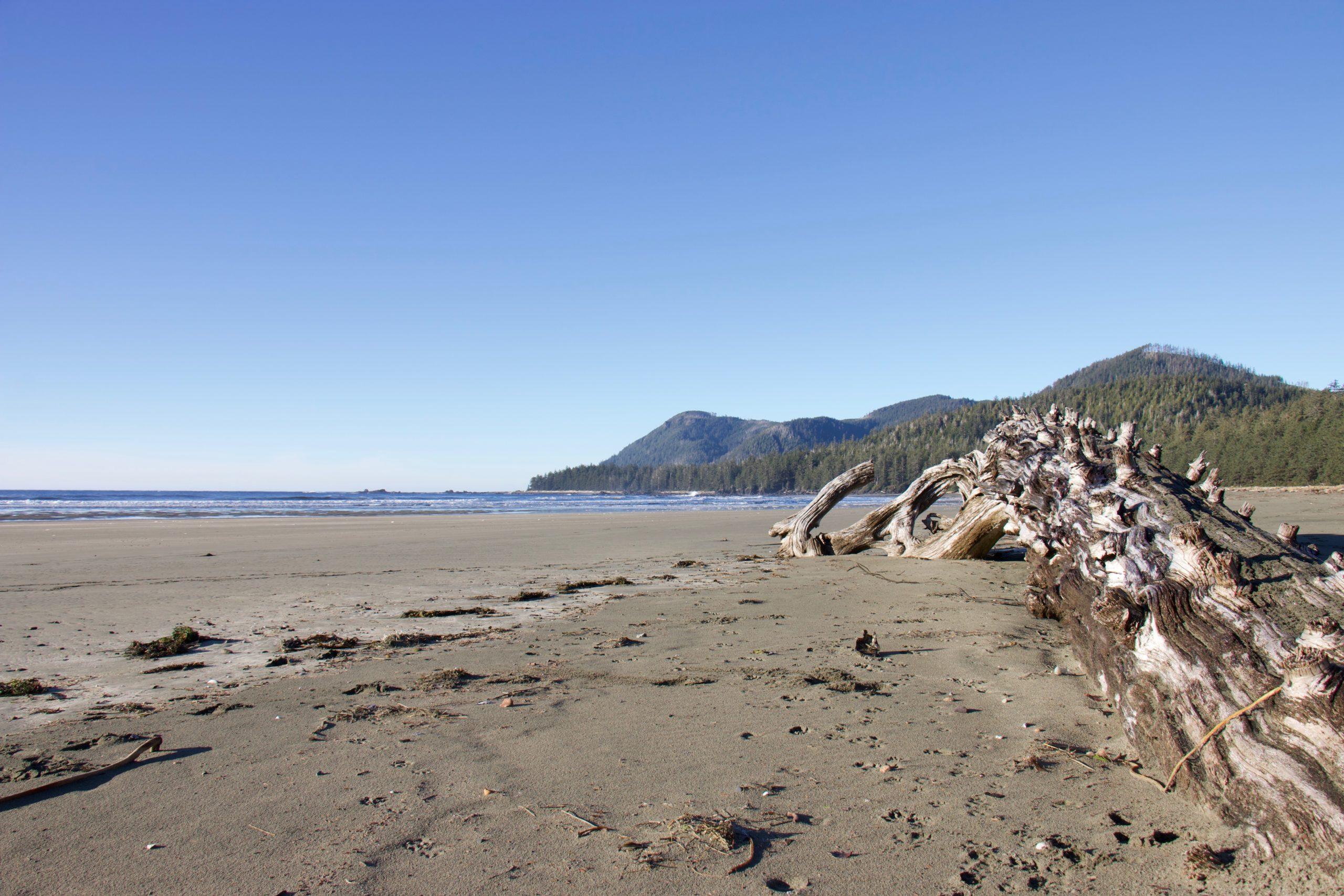 the beach at Raft Cove