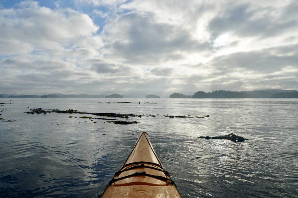 kayaking through kelp beds in Johnstone Strait
